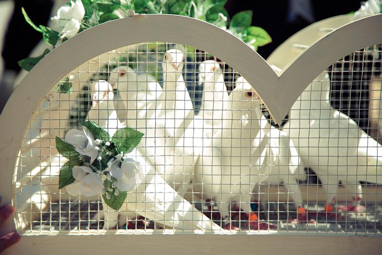 Tauben auf der Hochzeit Hochzeitsfotograf